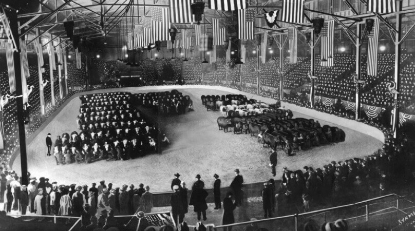 our history american royal