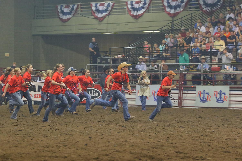 calf scramble american royal