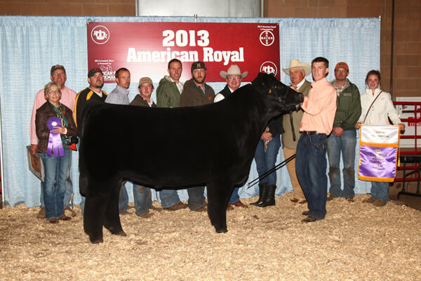 Youth Compete In American Royal Market Steer Show