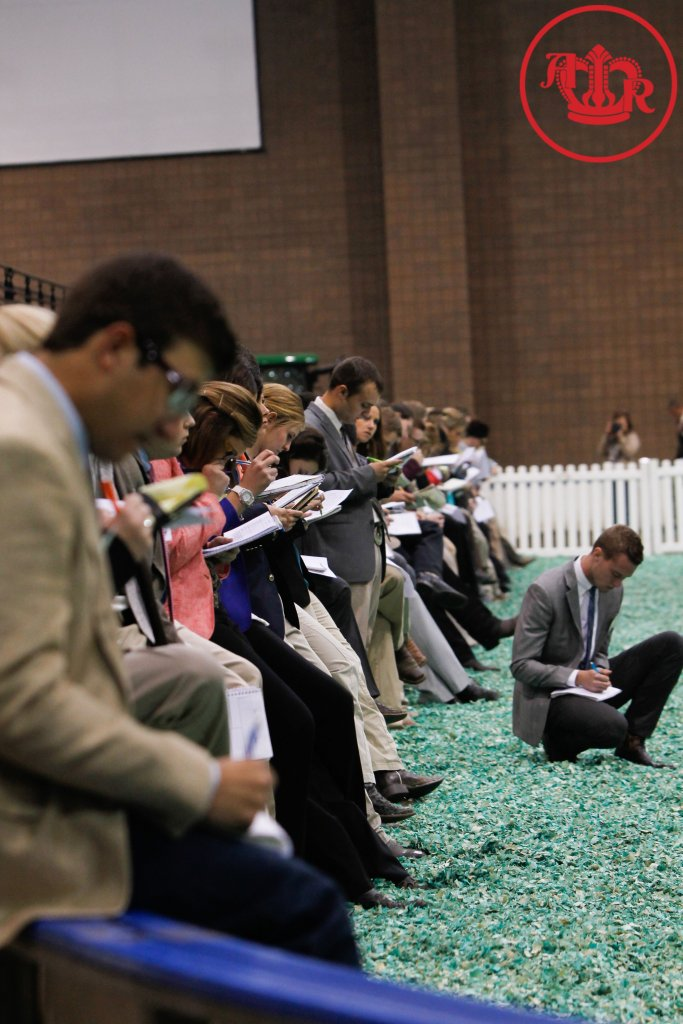 Collegiate Livestock Judging Winners Announced American