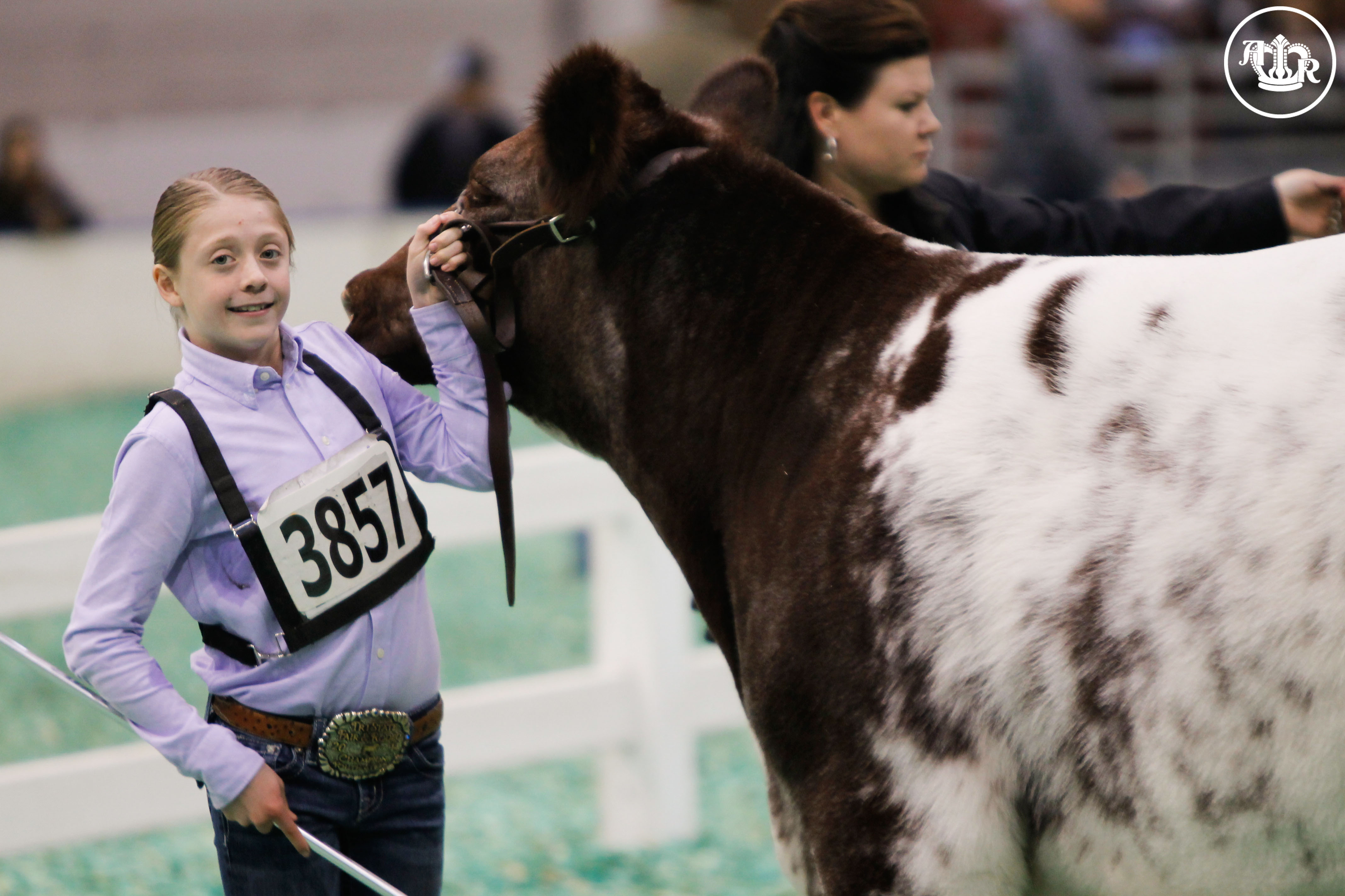 Shorthorn's Kick-Off American Royal Second Week