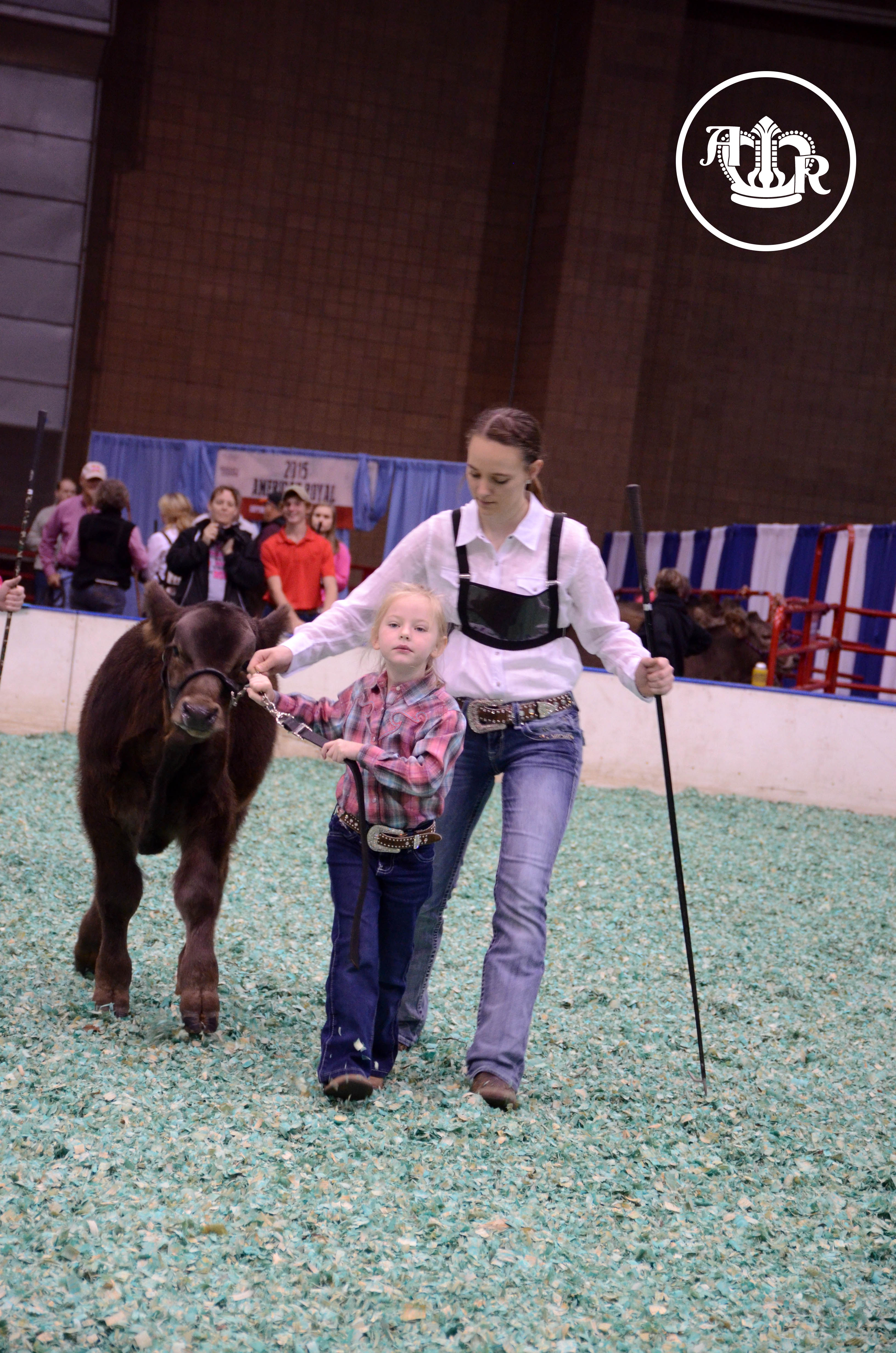 Competitive National Braunvieh and Beef Builder Open Show