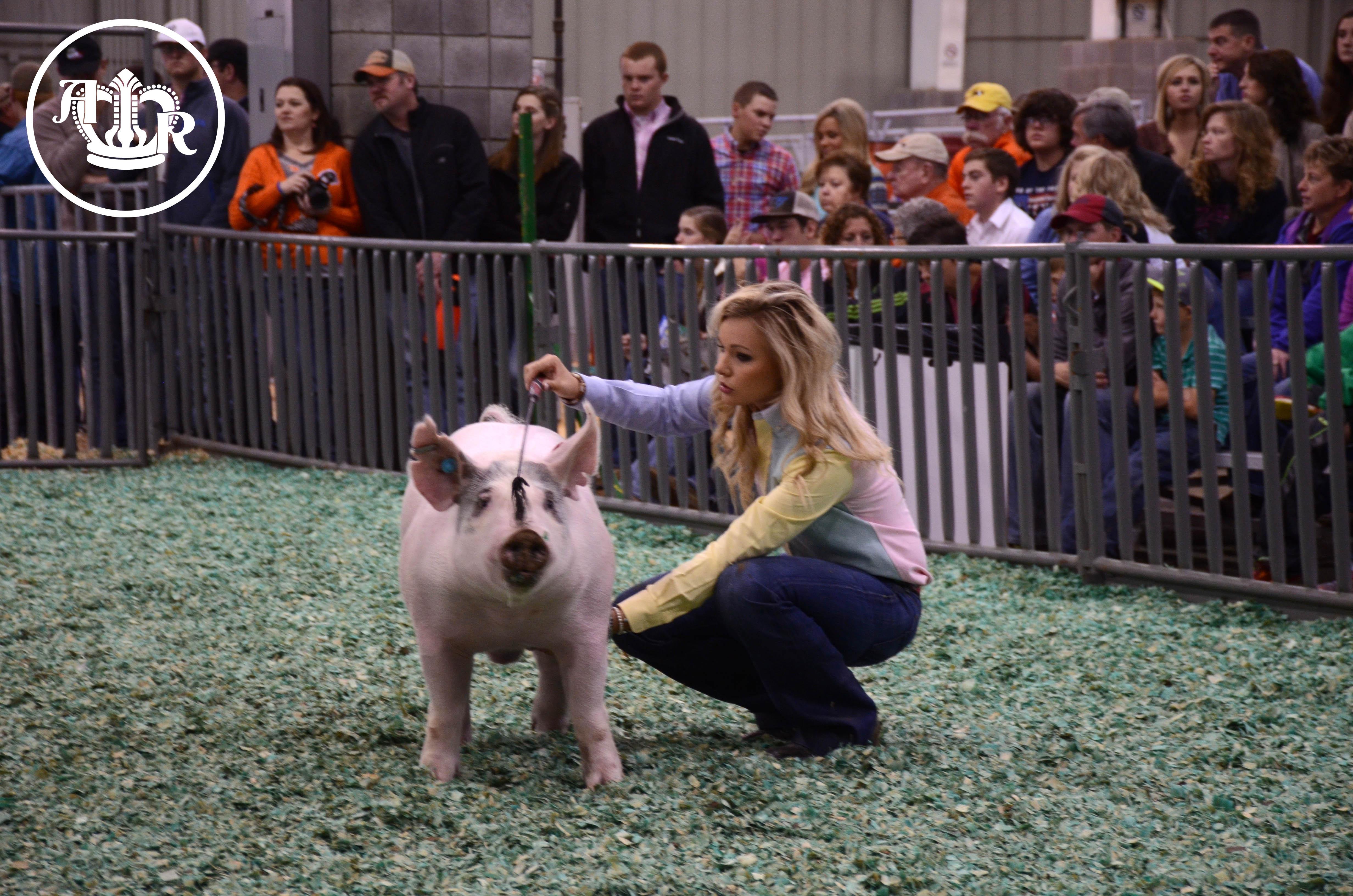 Langemeier Secures Grand Champion Swine Showman Title
