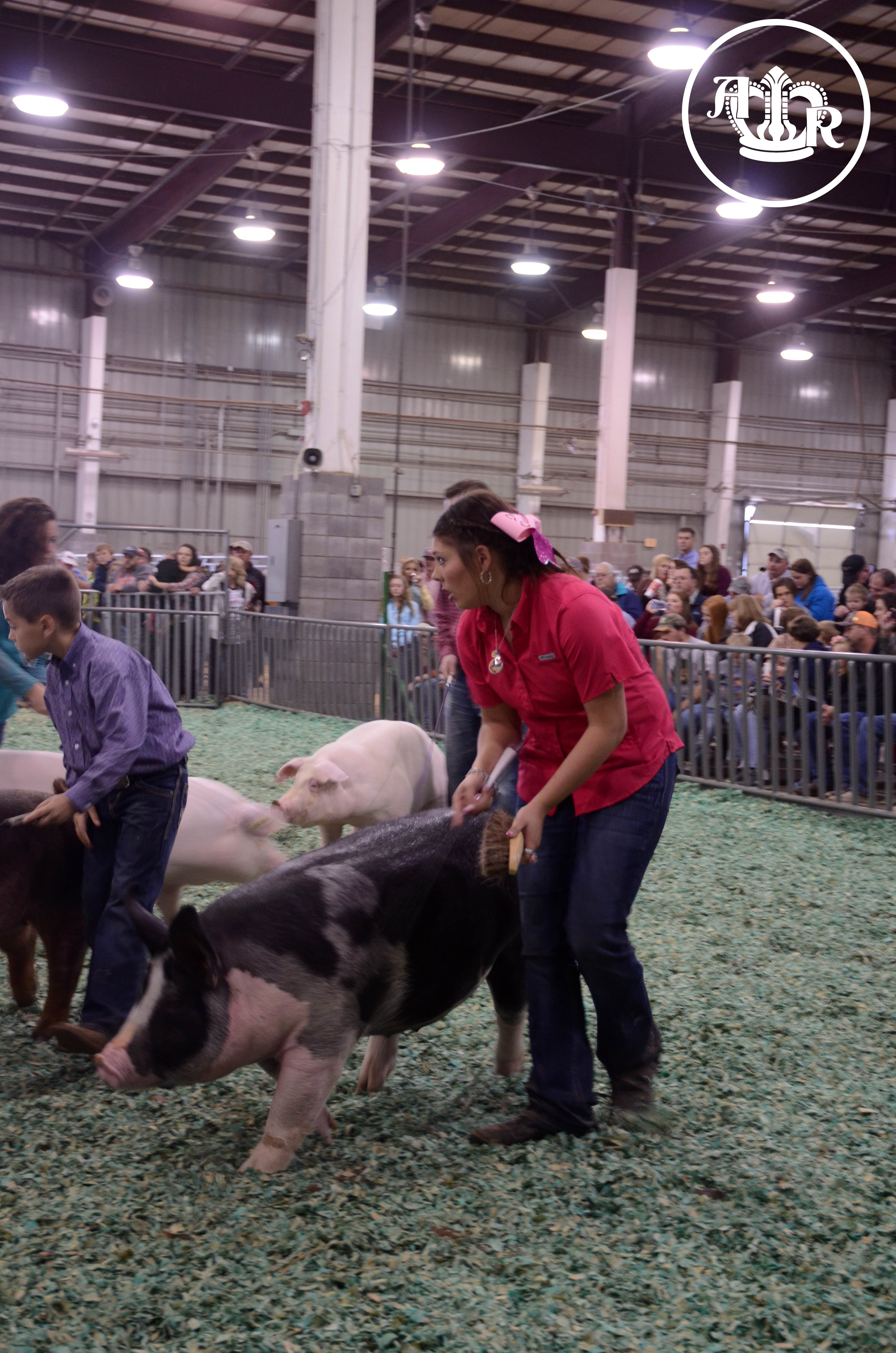 Berkshire Claims Supreme Champion Pedigreed Gilt Honors