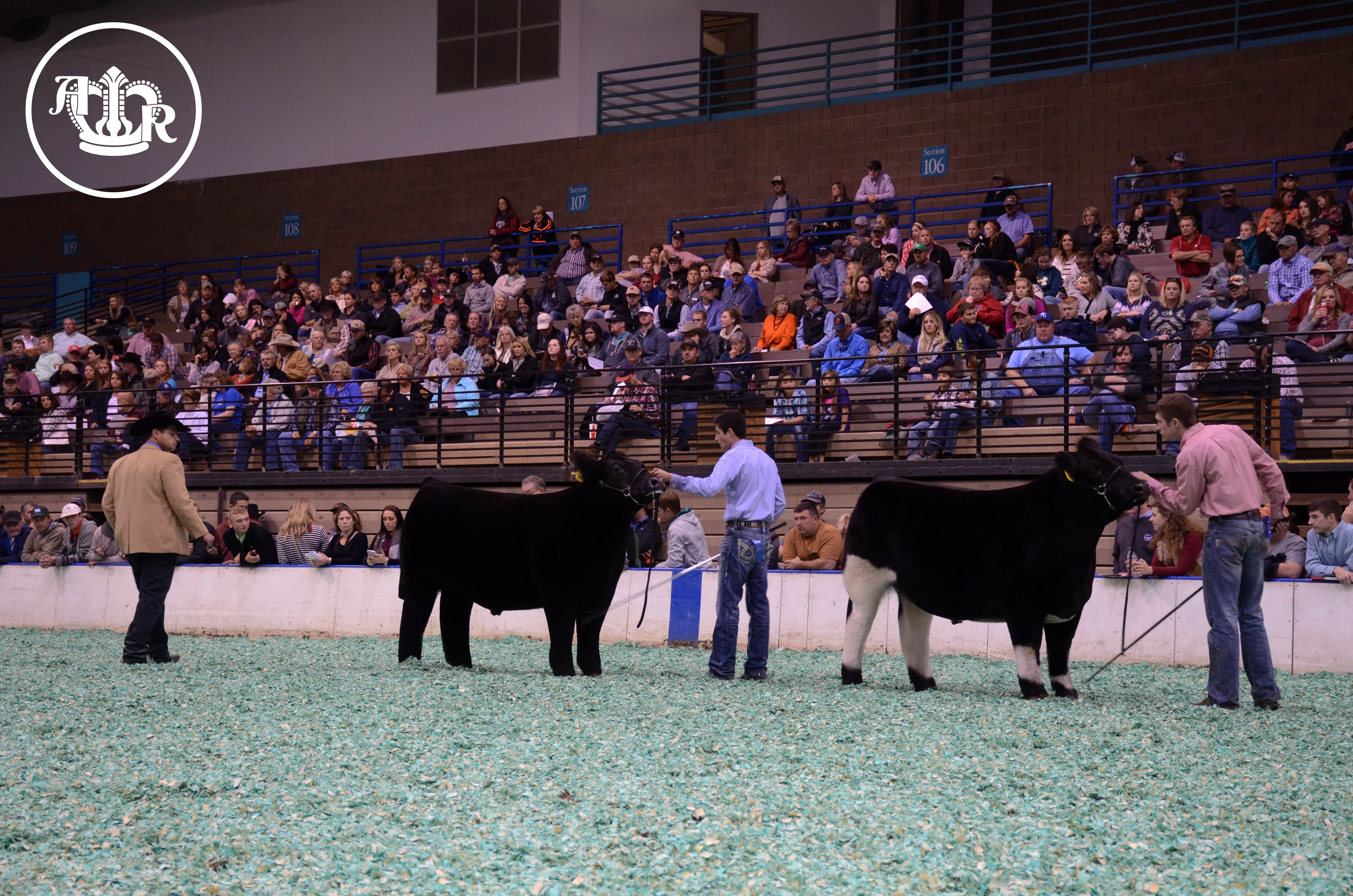 Quality Runs Deep in the Market Steer Show