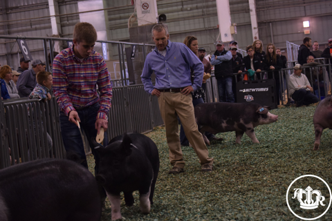Bennington Selects Crossbred Market Hogs Overall