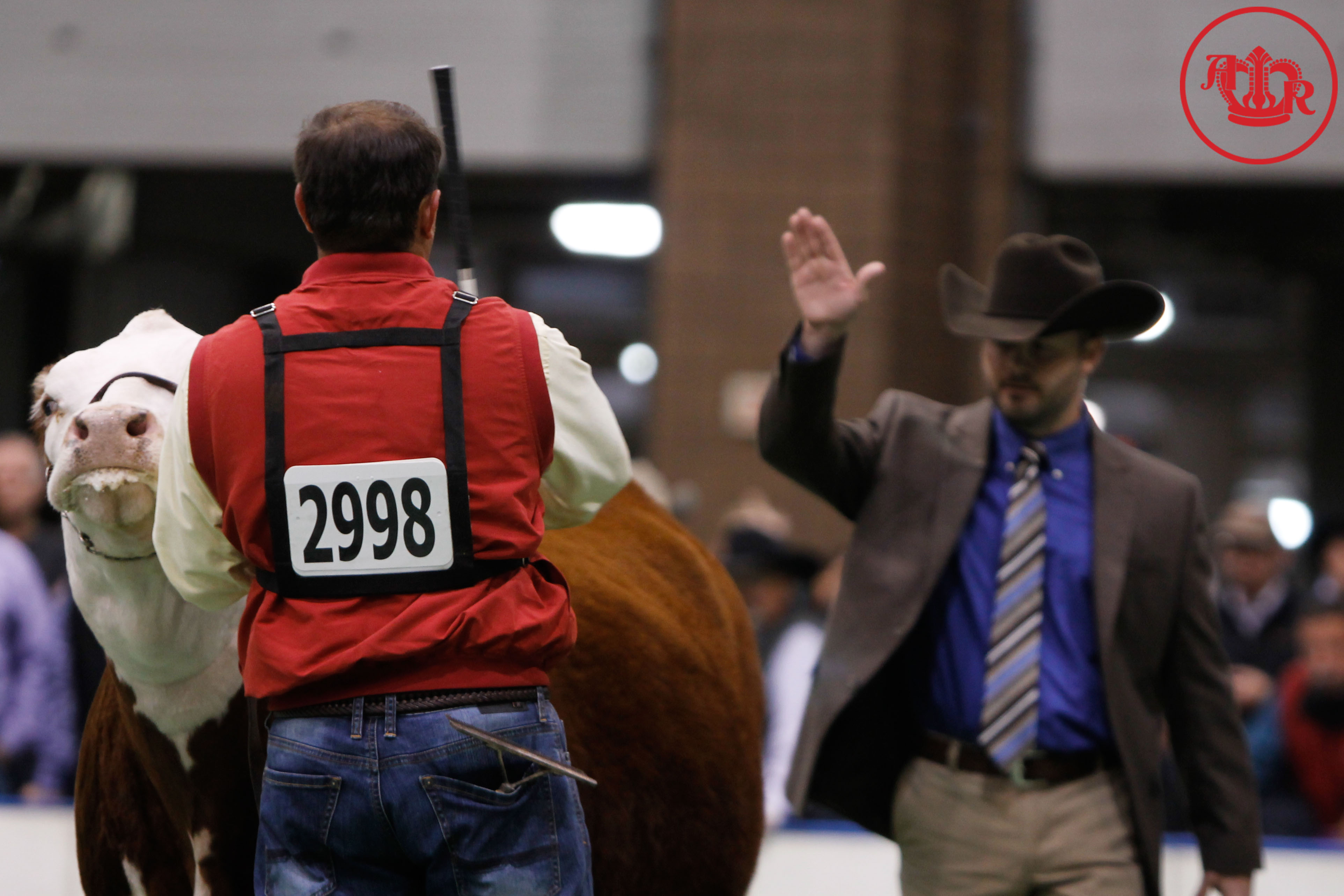 National Hereford Show Ends As American Royal Winds Down