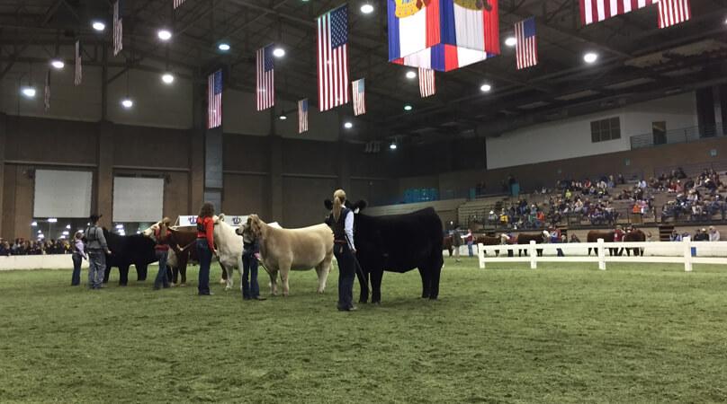 Livestock American Royal