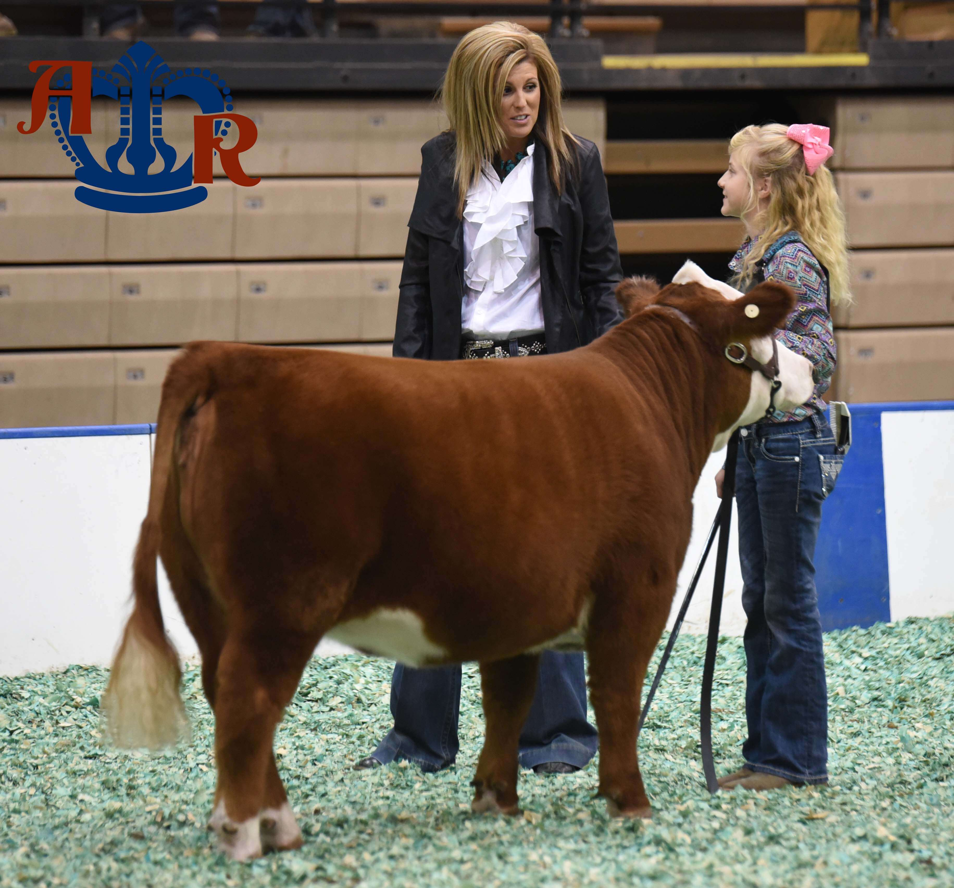 2016 Junior Beef Showmanship