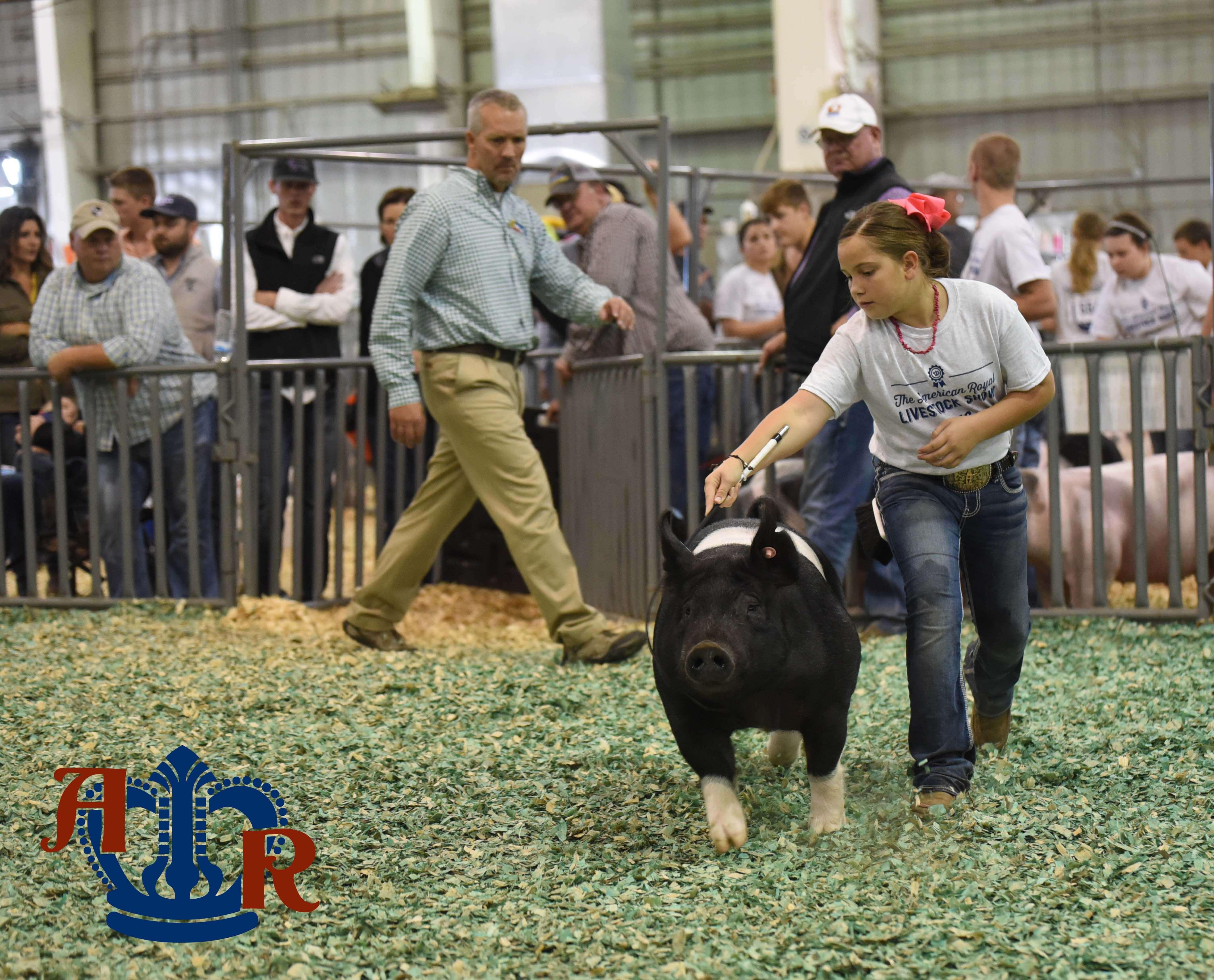 2016 Crossbred Market Hog Show