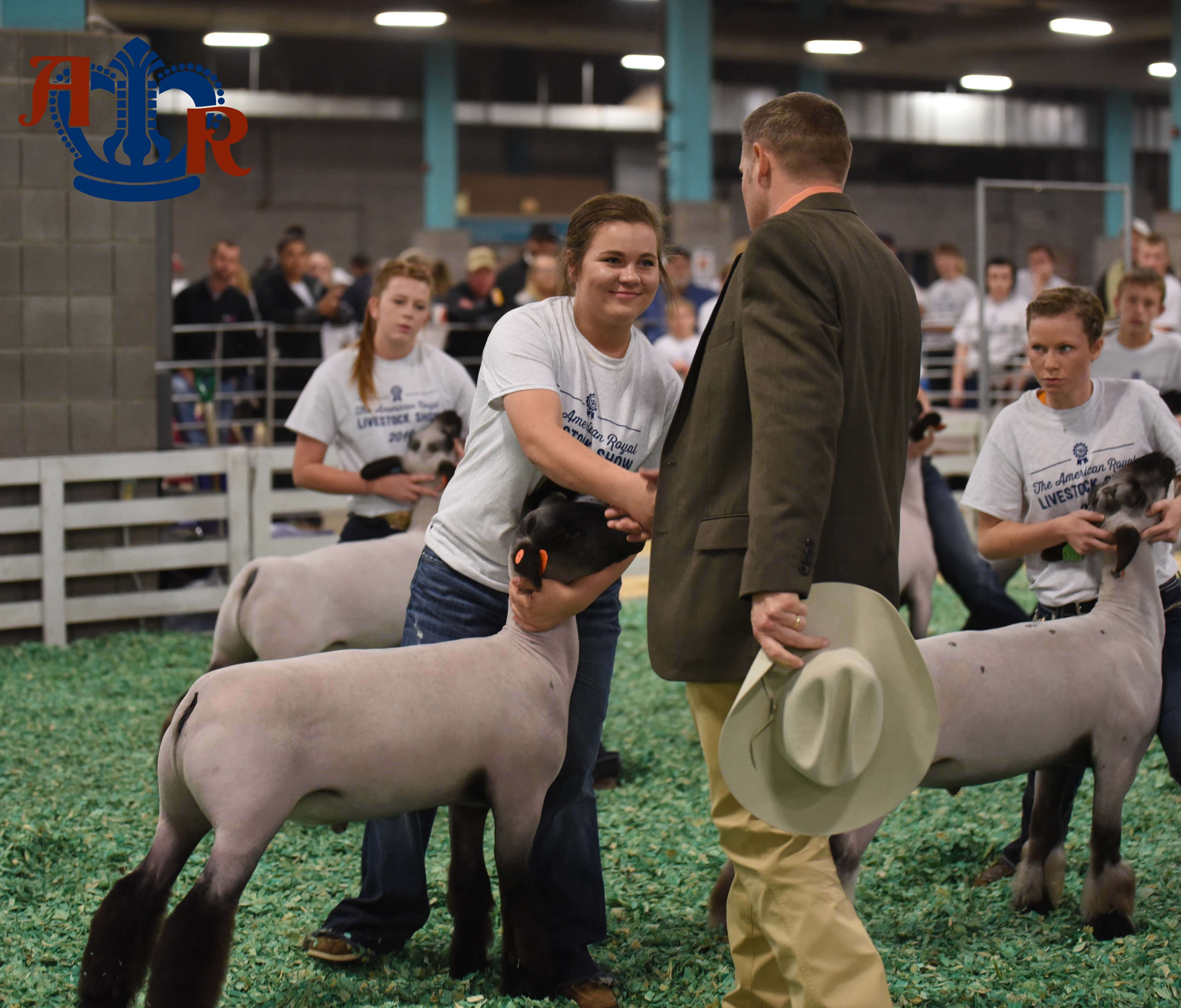 Record Entries in Market Lamb Show