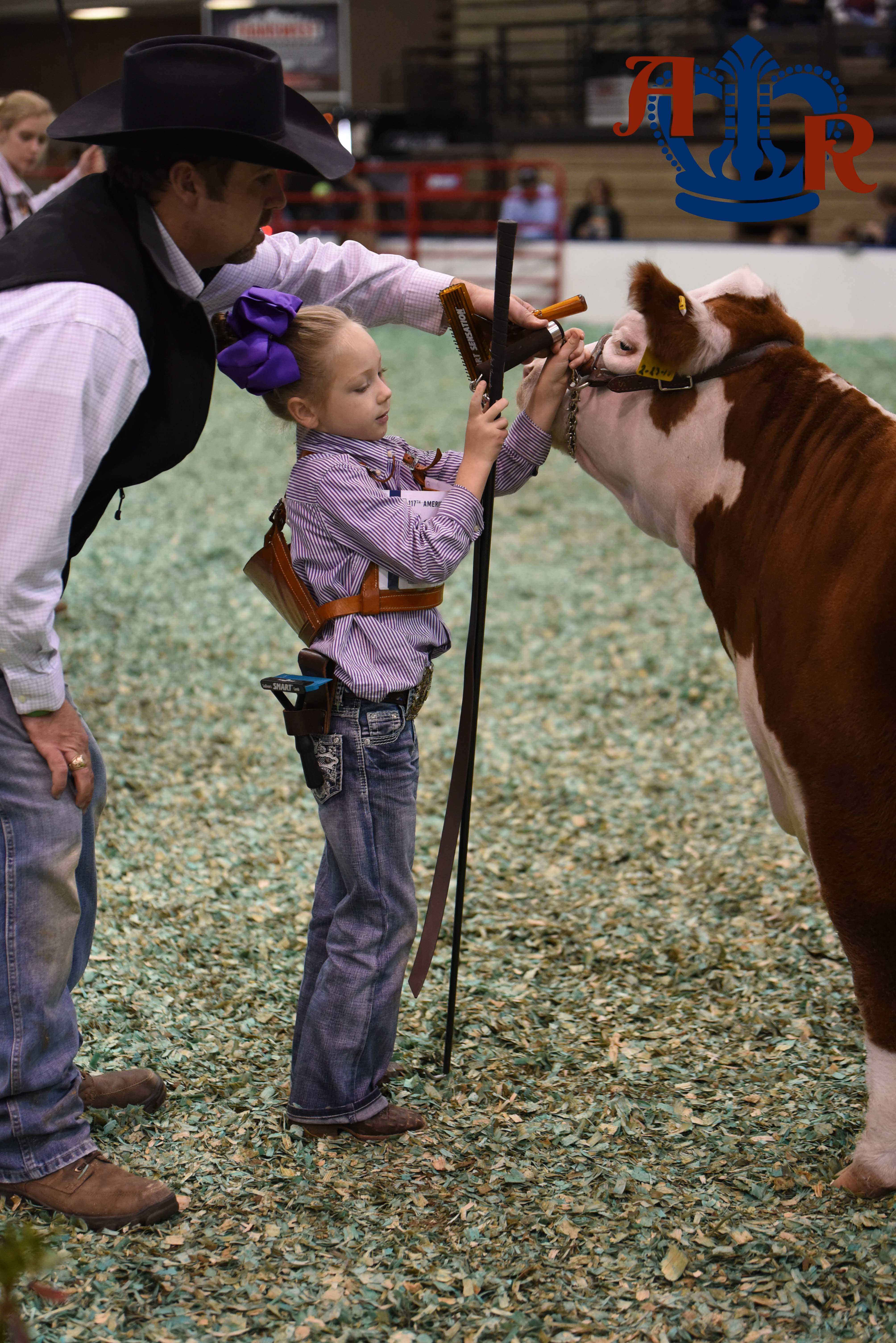 Maximum Fun In The Miniature Hereford Show