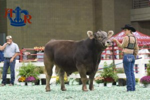 Doubet Sorts The Braunvieh Show American Royal