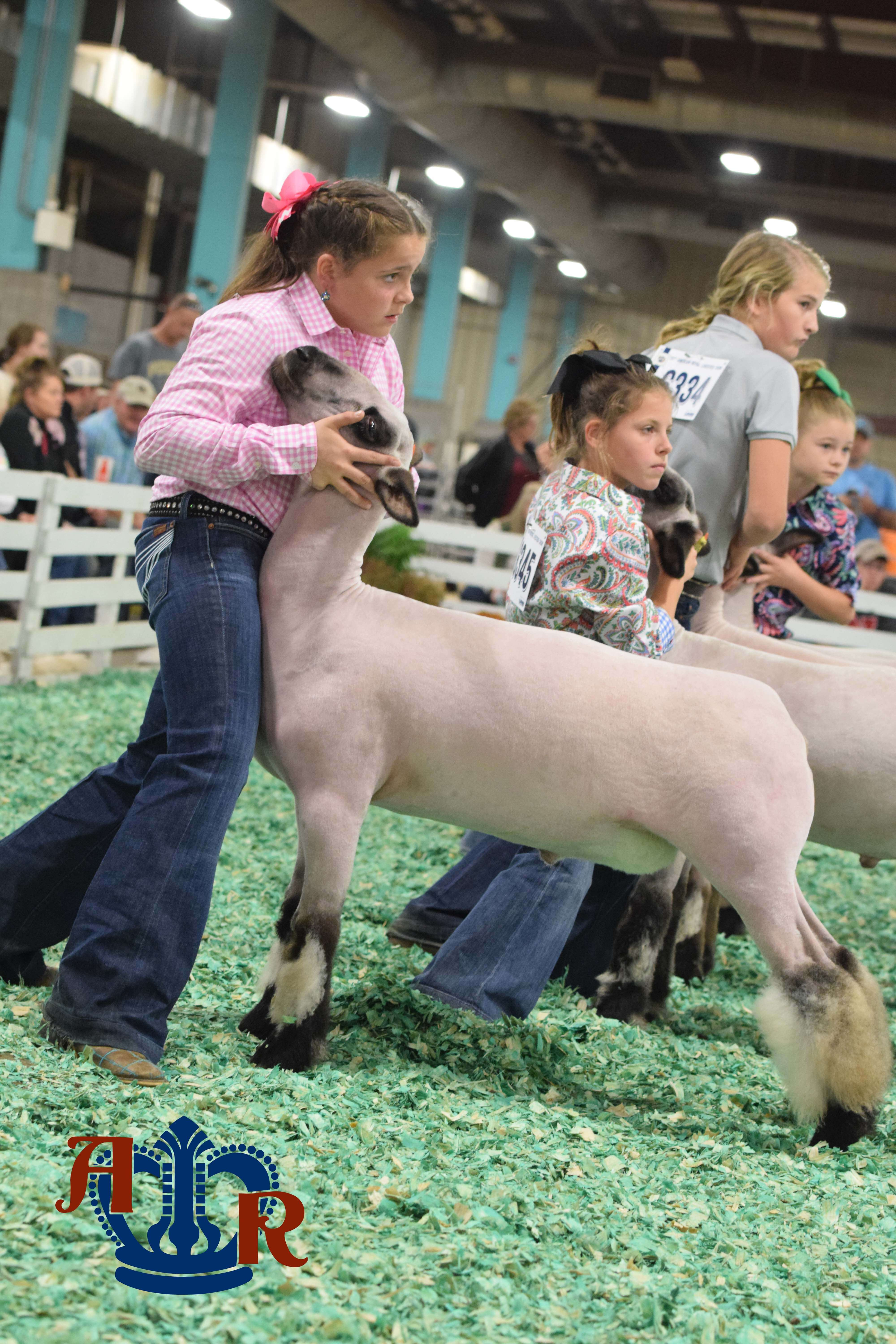 Madden selected as Overall Market Lamb Showmen
