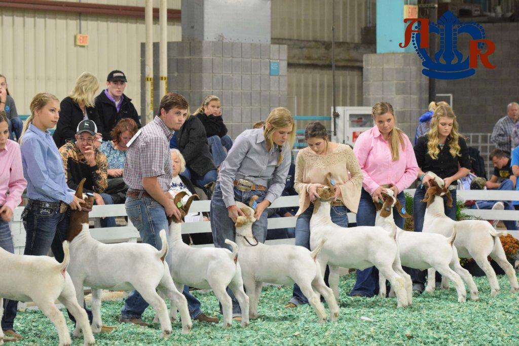 Stottlemeyer Takes Home Grand Champion Market Goat Showmen