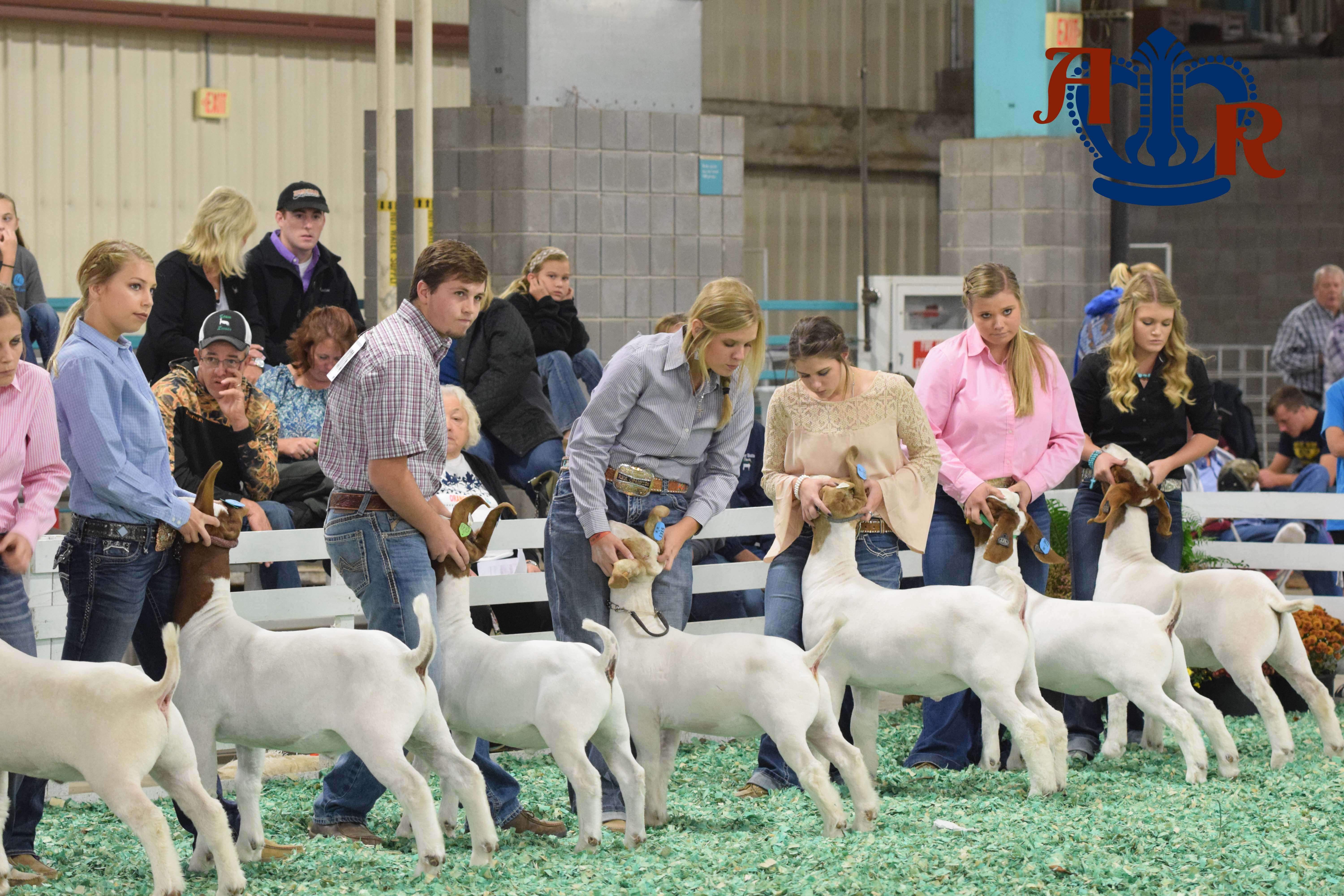 Stottlemeyer Takes Home Grand Champion Market Goat Showmen Title