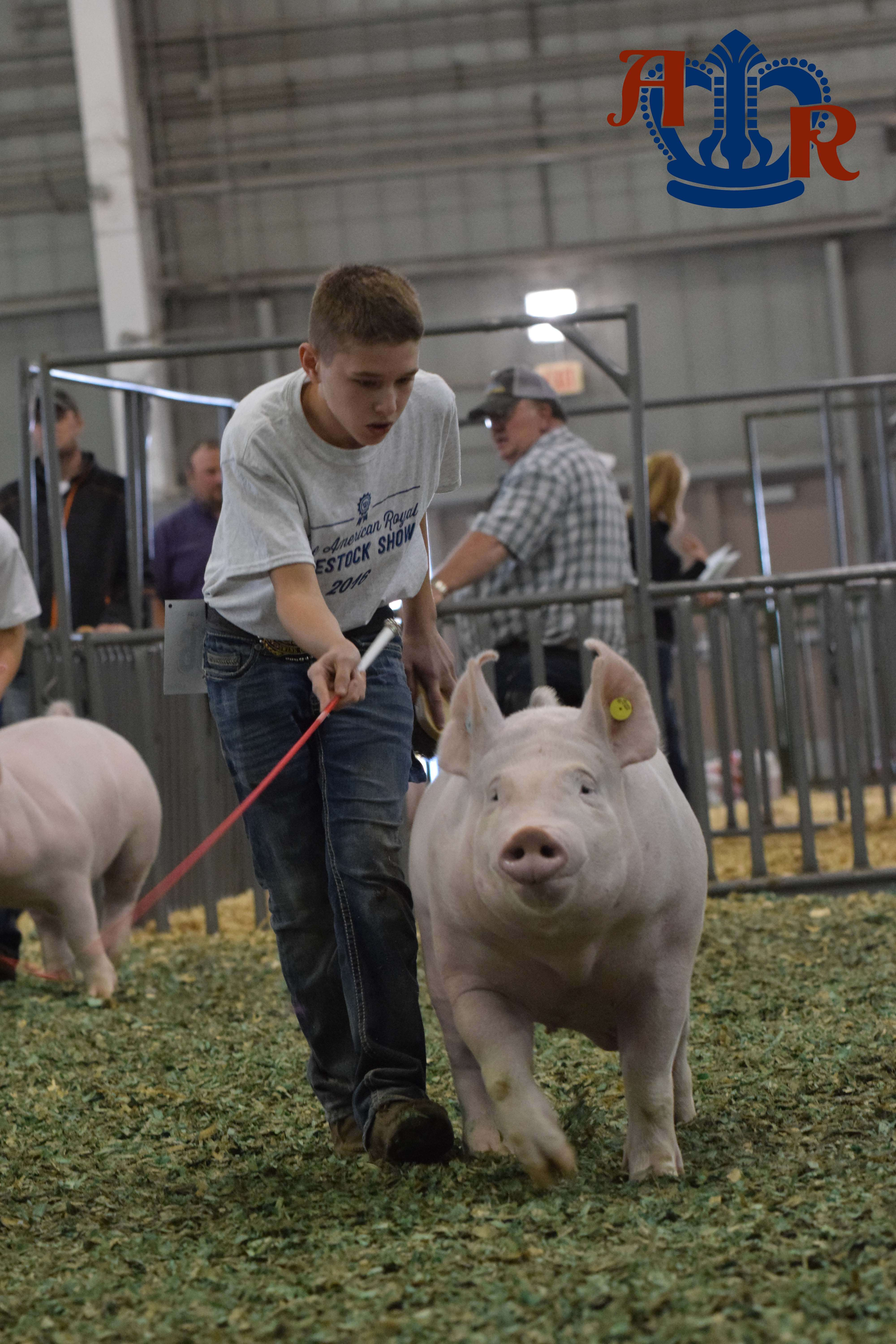 Bennington selects North as the Grand Champion Market Hog