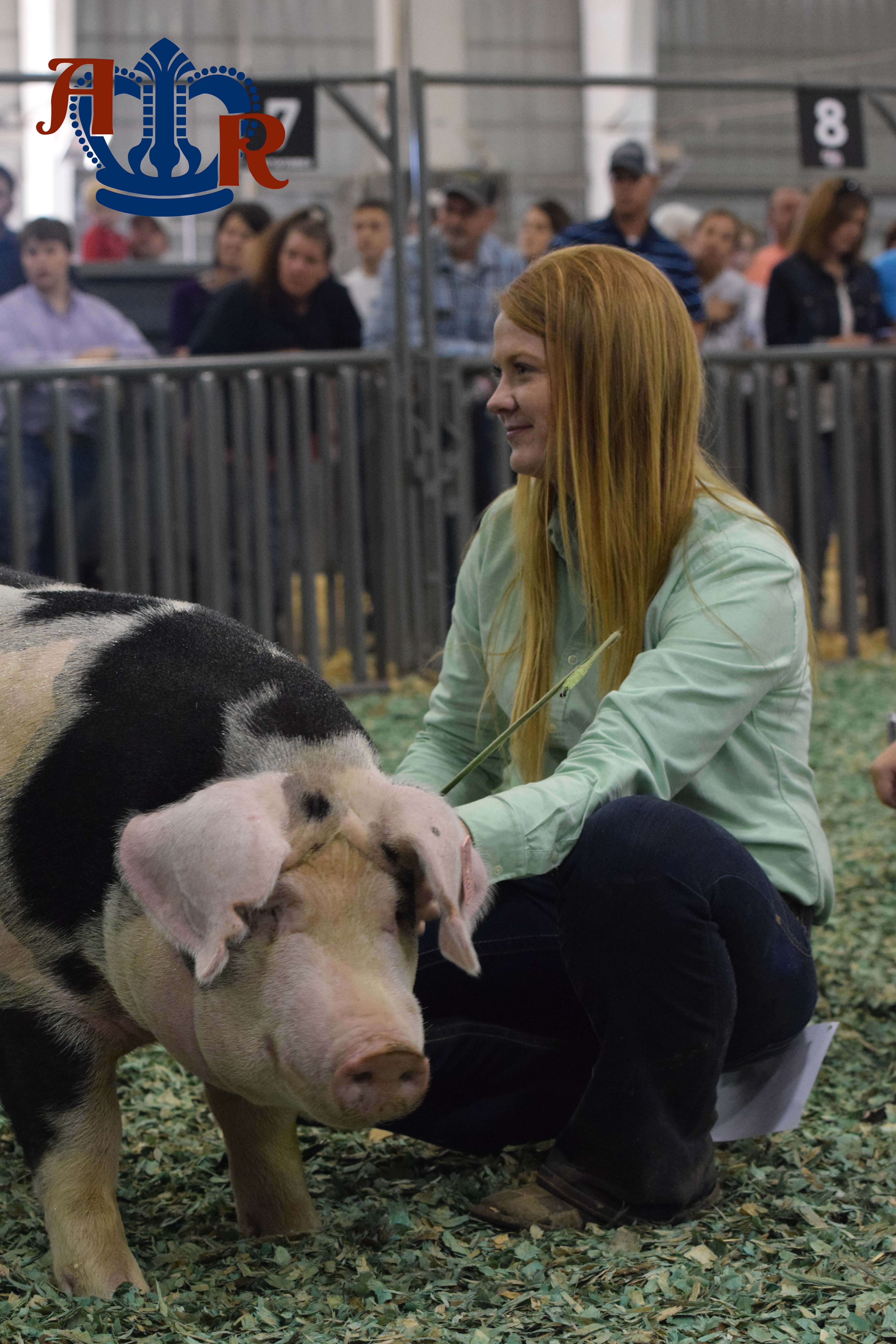 Duroc Claims Supreme Gilt Overall Title