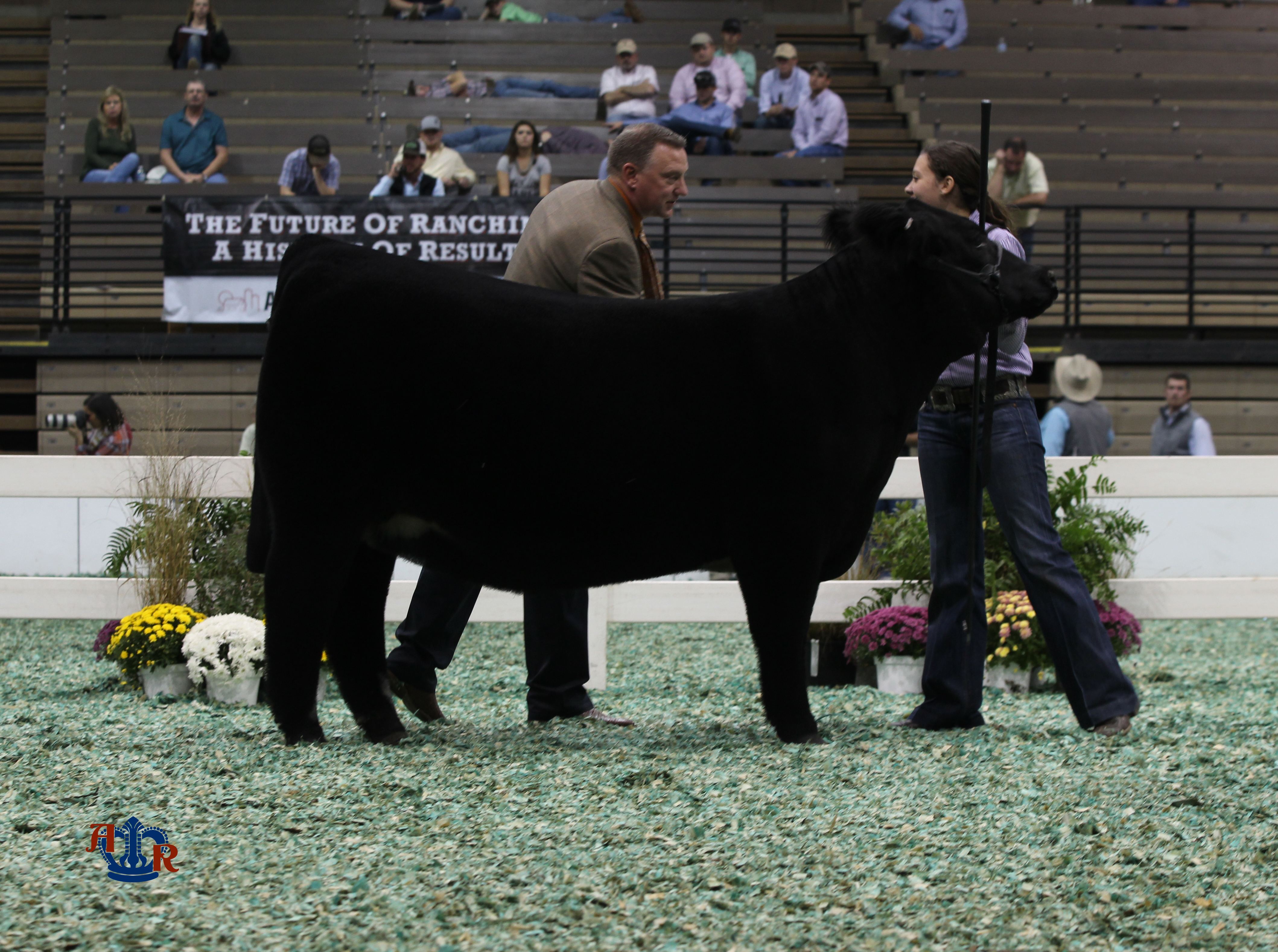 Curtin wins AOB/Commercial Junior Heifer Show
