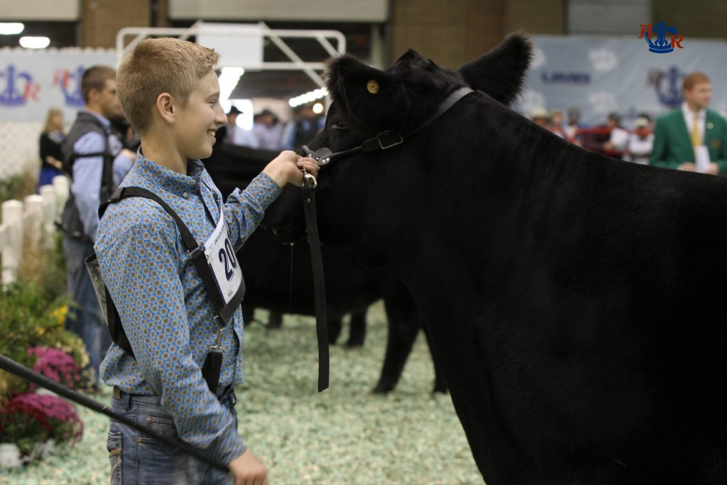 Competition Is High In The Angus Ring American Royal