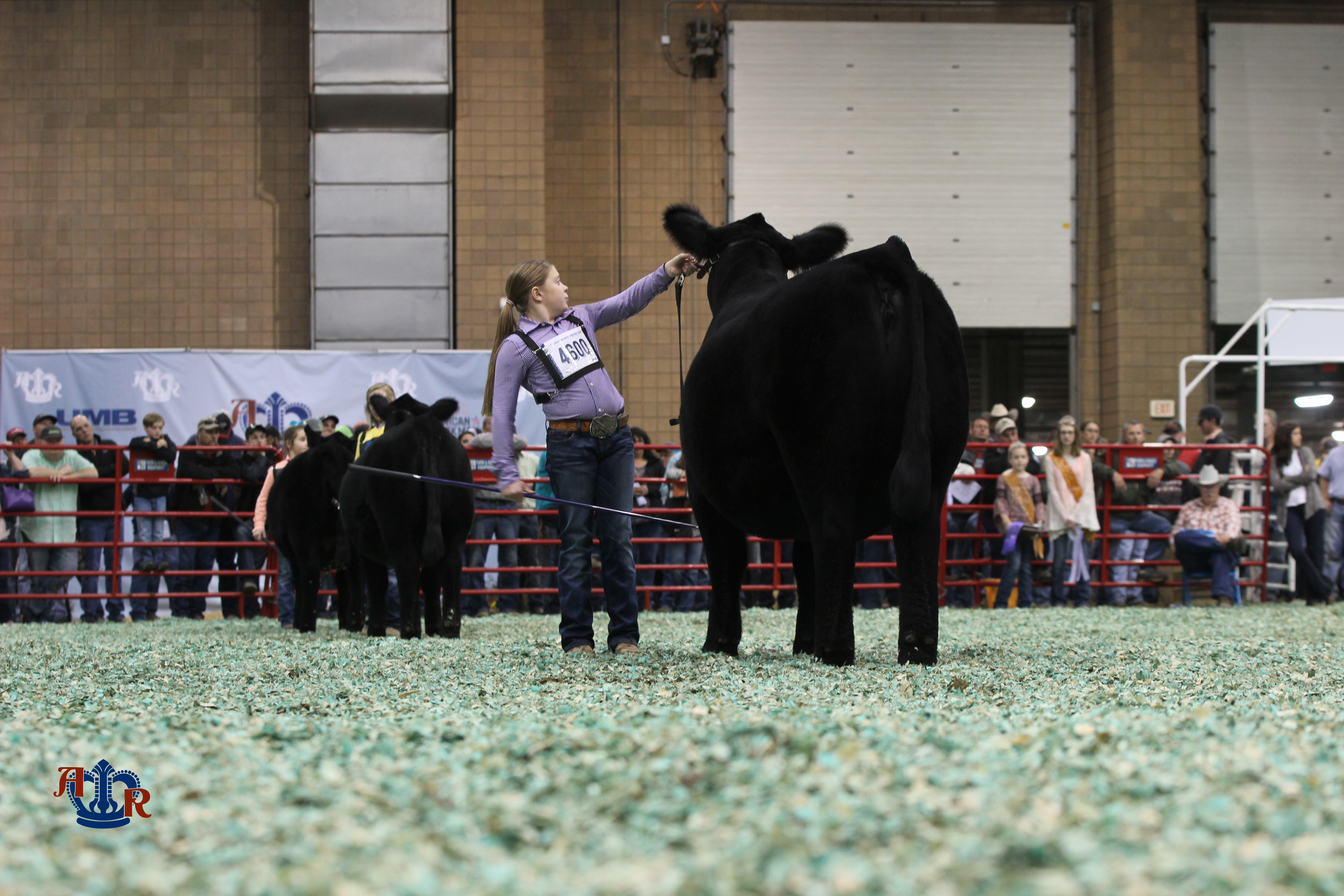Simmentals kick-off the morning strong