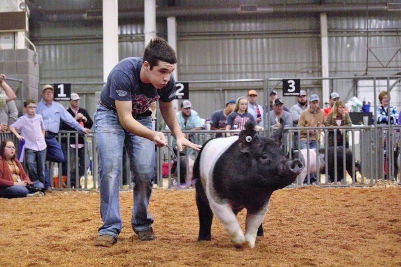 Swine 1.2