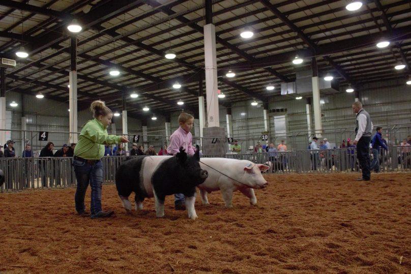 Swine1
