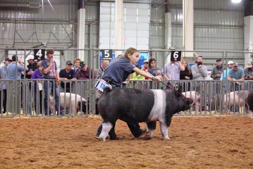 Swine1.3