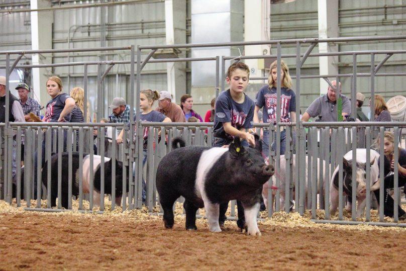 Swine1.4