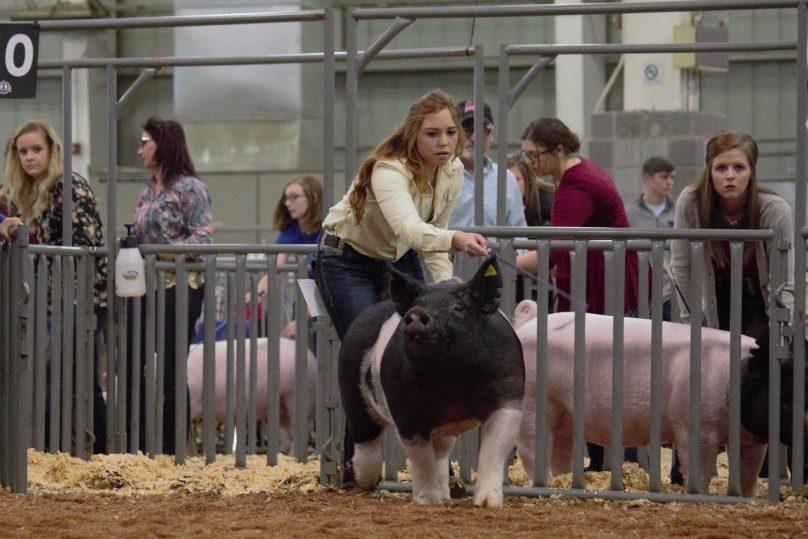 Swine3