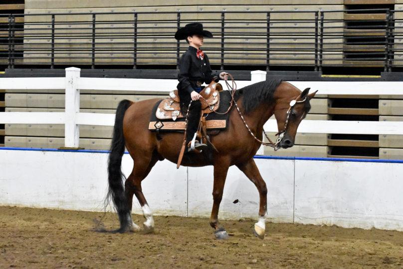 Arabian Horse Show American Royal