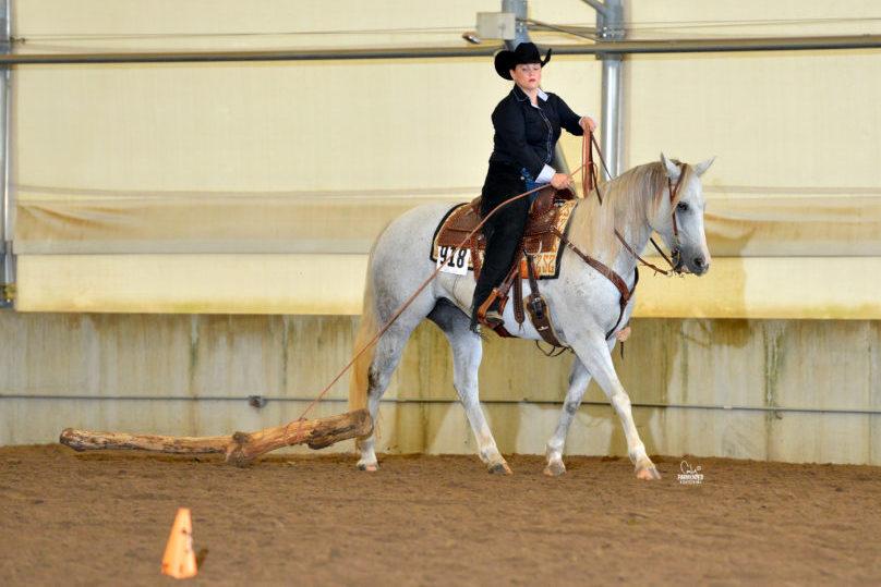 Quarter Horse American Royal