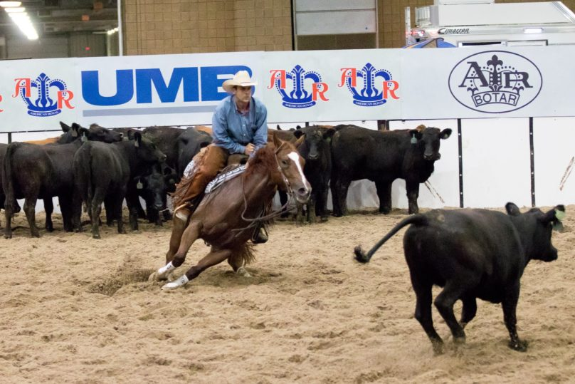 Cutting Horse American Royal