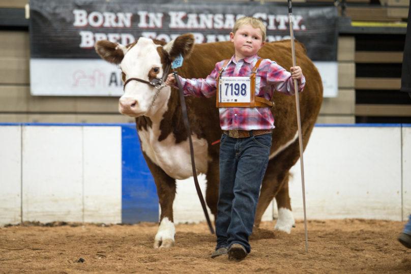 Livestock Show - American Royal